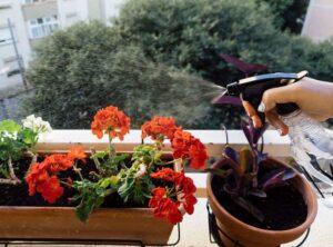 kwiaty pielęgnacja roślin doniczkowych