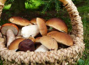 grzyby ciekawostki o grzybach
